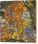 Fall In Nh 2 Wood Print