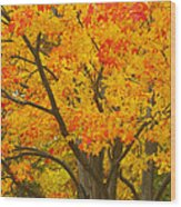 Fall In Pennsylvania Wood Print