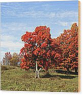 Fall In The Pastures Wood Print