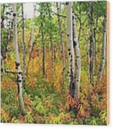 Fall In The Tetons Wood Print