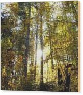 Fall In The Woods Close To The Elmau Wood Print