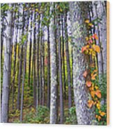 Fall Ivy In Pine Tree Forest Wood Print