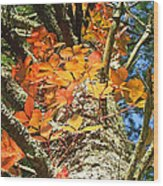 Fall Ivy On Pine Tree Wood Print
