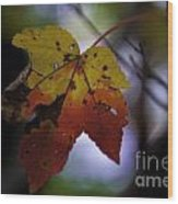 Red And Yellow Maple Leaf Wood Print