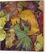Fall Leaves 1 Wood Print