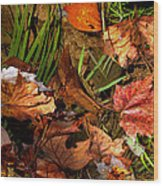 Fall Leaves 5 Wood Print