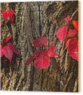 Fall Leaves Against Tree Trunk Wood Print