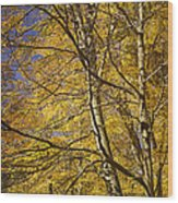 Fall Leaves And Trees In West Michigan No171 Wood Print
