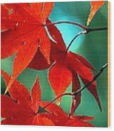 Fall Leaves In All Their Glory Wood Print