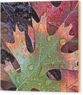 Fall Leaves I V Wood Print