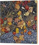 Fall Leaves On Pavement Wood Print by Elena Elisseeva