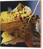 Fall Maple Leaf Wood Print