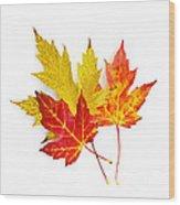 Fall Maple Leaves On White Wood Print