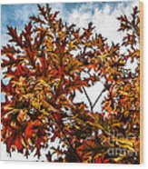 Fall Maple Leaves Wood Print