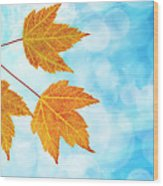 Fall Maple Leaves Trio With Blue Sky Wood Print