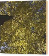 Fall Maple Wood Print