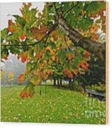 Fall Maple Tree In Foggy Park Wood Print