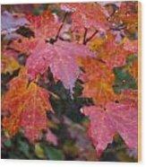 Fall Maples Wood Print