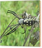Fall Meadow Spider - Argiope Aurantia Wood Print