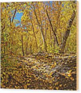 Fall On The Forest Floor Wood Print