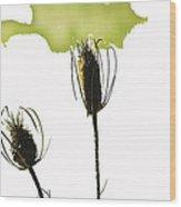 Fall On White Wood Print