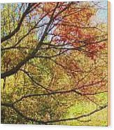 Fall Outstretched Wood Print