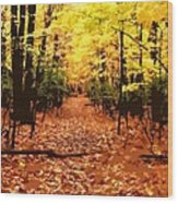 Fall Path Wood Print