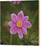 Fall Pink Daisy Wood Print