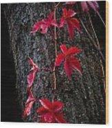 Fall Red Wood Print