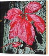 Fall Red Leaf Wood Print