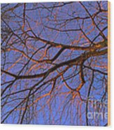 Fall Reflections By Diana Sainz Wood Print
