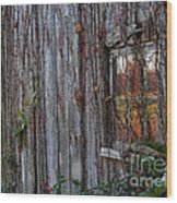 Fall Reflections On Weathered Glass Wood Print