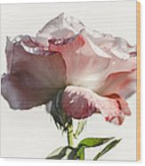 Fall Rose Wood Print