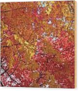 Fall Saint Louis 1 Wood Print