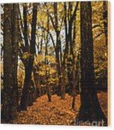 Fall Scene In Bidwell Park Wood Print