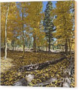 Fall Splendor Wood Print