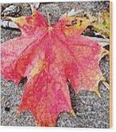 Fall St. Louis 7 Wood Print