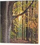 Fall Sunset Wood Print by Jennifer  King