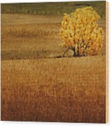 Fall Tree And Field #1 Wood Print