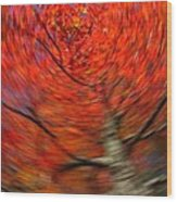 Fall Tree Carousel Wood Print by Juergen Roth