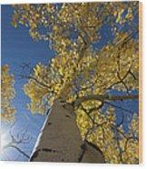 Fall Tree Wood Print by David Yack