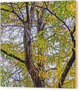 Fall Tree Wood Print by Baywest Imaging