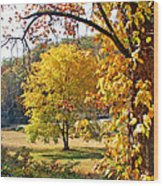 Fall Trees 4 Of Wnc Wood Print