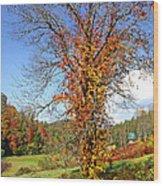 Fall Trees 5 Of Wnc Wood Print