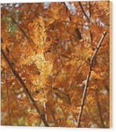 Fall Trees II Wood Print