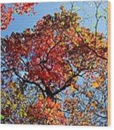 Fall Trees Of Wnc Wood Print