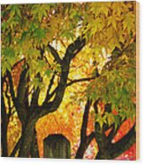 Fall Trees On A Country Road 3 Wood Print
