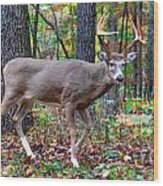 Fall Trophy Buck Wood Print