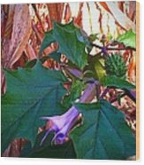 Fall Wild Flower Purple Bloom Wood Print by Brittany Perez