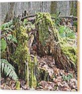Fall Woods Wood Print